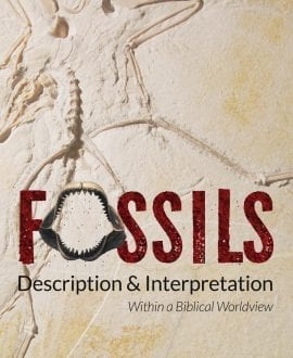 Fossils Description & Interpretation