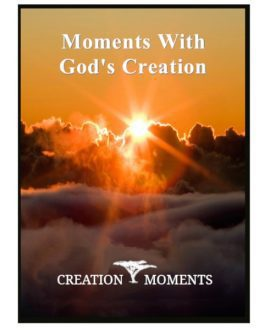 Moment with God's Creation 1 DVD