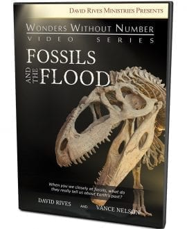 Fossils and the Flood DVD