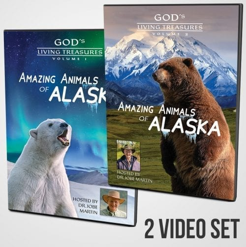 Amazing Animals of Alaska DVD Vols. 1 & 2