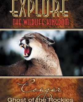 cougar dvd cover