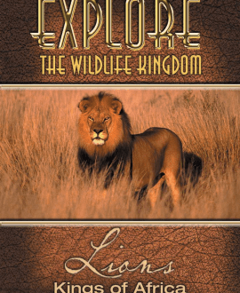 lions dvd cover