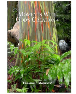 Moments with God's Creation 4 DVD
